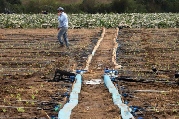 Gobierno decreta emergencia agrícola por escasez hídrica en Coquimbo, Valparaíso, O'Higgins y Maule
